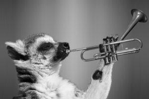 Best Trumpet Brands